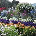 Photos: 春の花壇(4月)