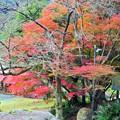Photos: 成川渓谷の紅葉