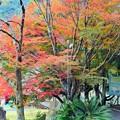 Photos: 紅葉・成川渓谷2