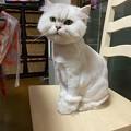 猫ですけどなにか