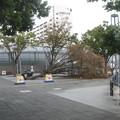 Photos: 倒木
