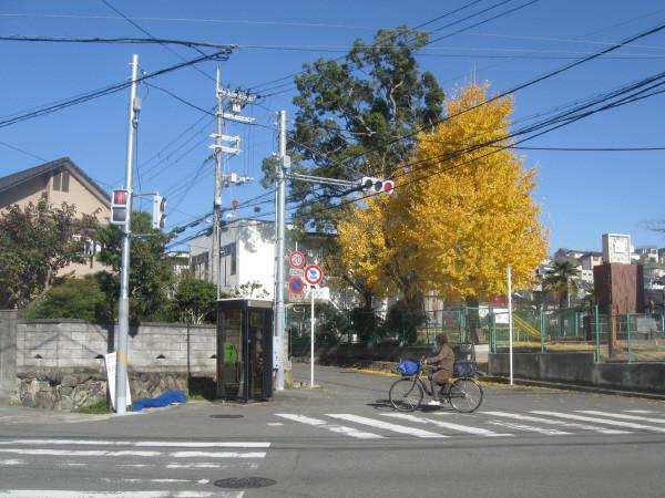 Photos: 向かいから