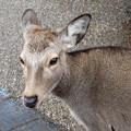 Photos: 鹿肉