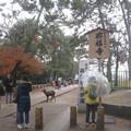 Photos: 奈良公園