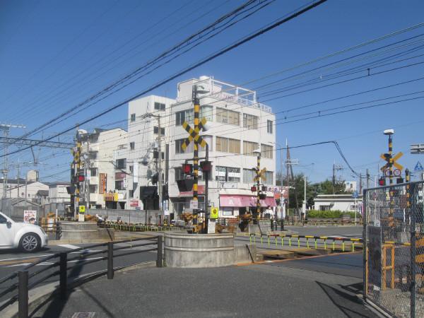 俊徳道5号