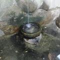 垂れる垂水小滝