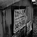 Photos: 色消し大魔王#007