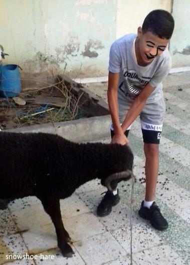 羊が家に到着!