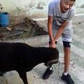 Photos: 羊が家に到着!
