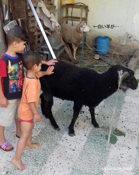 羊を触ってみたよ