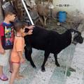 Photos: 羊を触ってみたよ