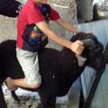 Photos: 羊に乗ってみた