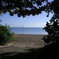 写真: 早朝の海辺