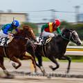 Photos: 競走馬02
