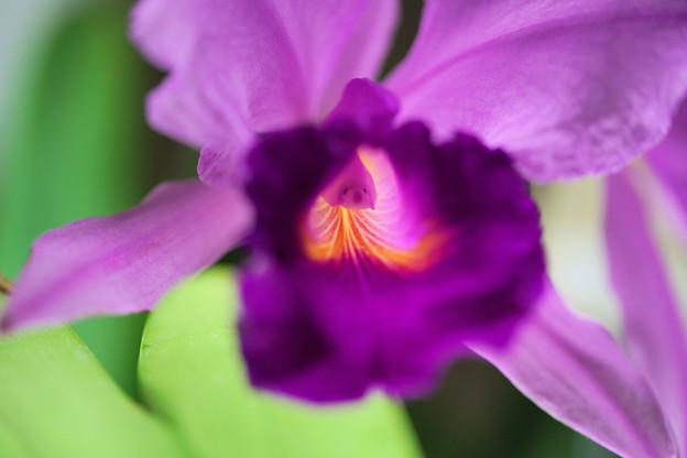紫の光の路に導かれ我心にも大志いだかん