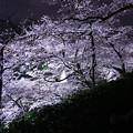 Photos: 夜桜追っかけ最終章2