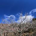 写真: 春まだ遠く1