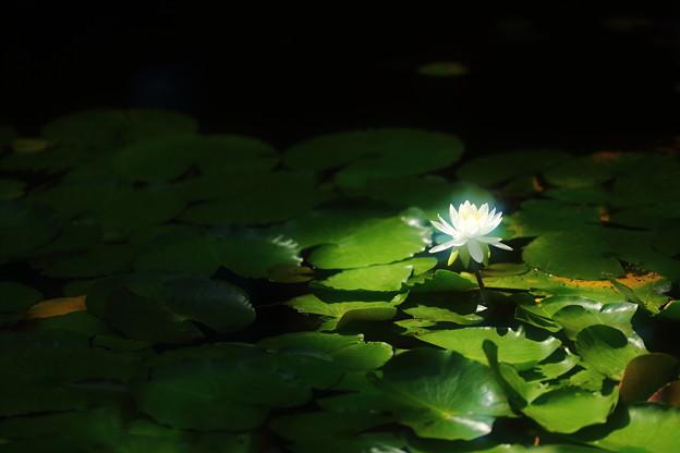 Photos: 後光の光
