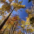 Photos: 紅葉を仰ぐ