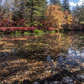 Photos: 落ち葉の浮遊