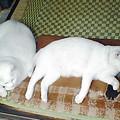 Photos: 8-29-6-pyoro&shiro