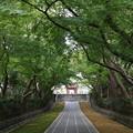 Photos: 藤沢市 天嶽院1516