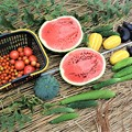 Photos: 今日の収穫