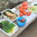 写真: 菜園での昼食