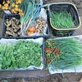 Photos: 10月20日収穫