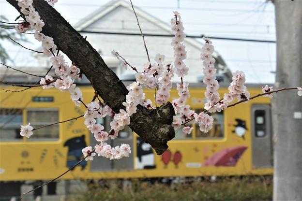 西武電車と梅の花