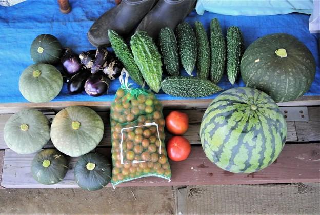 Photos: 第十回夏野菜収獲。