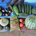 第十回夏野菜収獲。