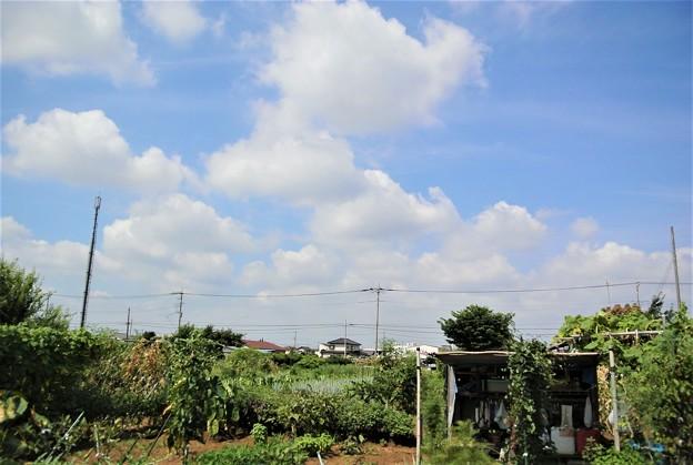 菜園の真夏雲