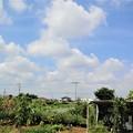 Photos: 菜園の真夏雲
