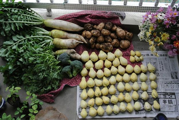 菜園収穫(11月22日)