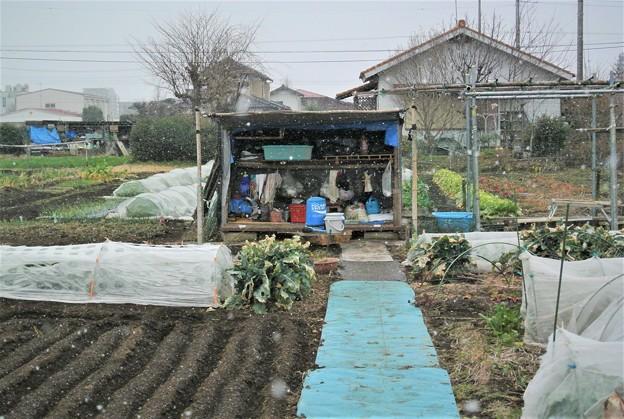 雪の菜園.