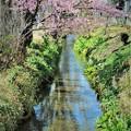 用水路も春本番