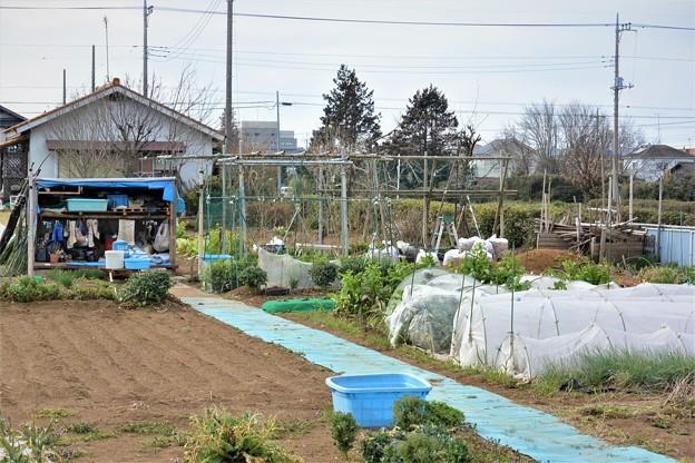 シーズンイン前の菜園(右)