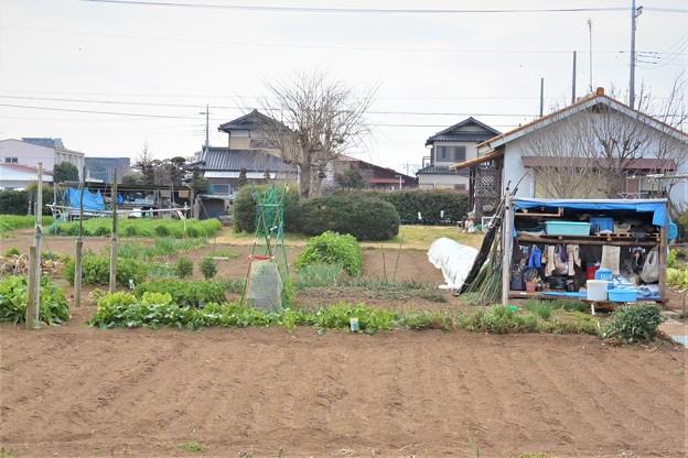 シーズンイン前の菜園(左)