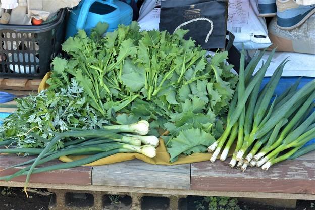 4月14日・春野菜収穫