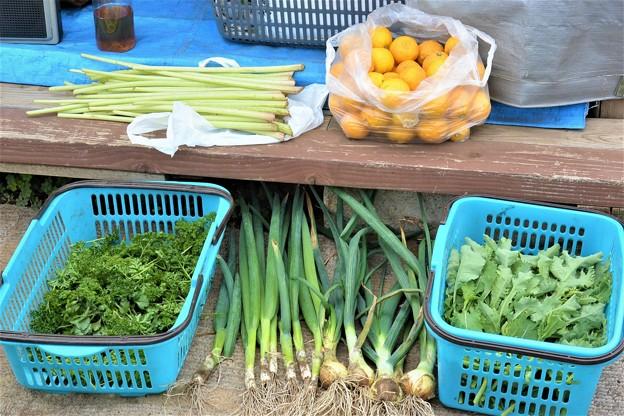 菜園・4月23日の収穫