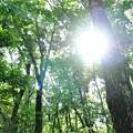 Photos: 森にオオルリの青を探して・・