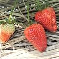 菜園のイチゴ