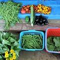 夏野菜盛期収獲