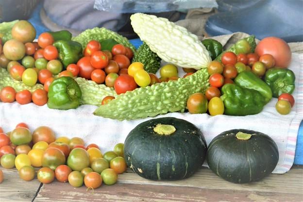7月30日の夏野菜収穫