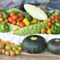Photos: 7月30日の夏野菜収穫