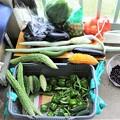 8月8日夏野菜収穫