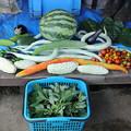 9月4日夏野菜収穫
