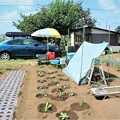 新菜園と愛車