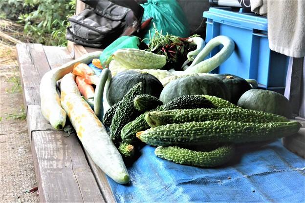 9月10日夏野菜収穫